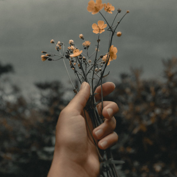 Hand holding orange flowers